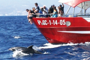 Dolphin Discovery- Multiacuatic